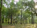 На Львівщині протягом місяця висадили 2 млн дерев