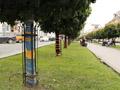 Львівські дерева одягли у в'язані прапори країн-учасниць ЄВРО
