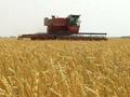 В Україні розпочалися жнива - 13 областей намолотили 805 тис. тонн зерна